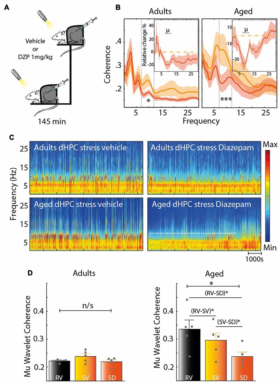 Frontiers Acute Stress Affects The Expression Of Hippocampal Mu Types Oscillations