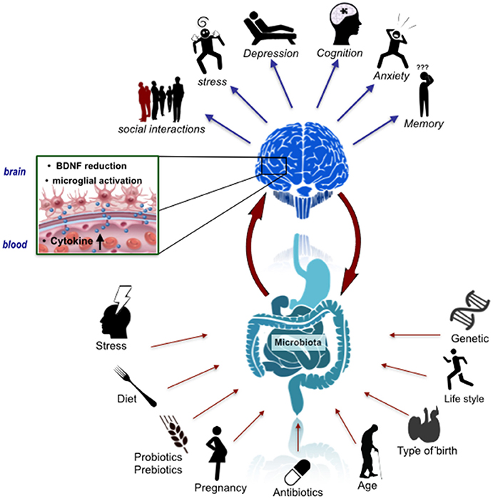 Frontiers | Cross Talk: The Microbiota and Neurodevelopmental