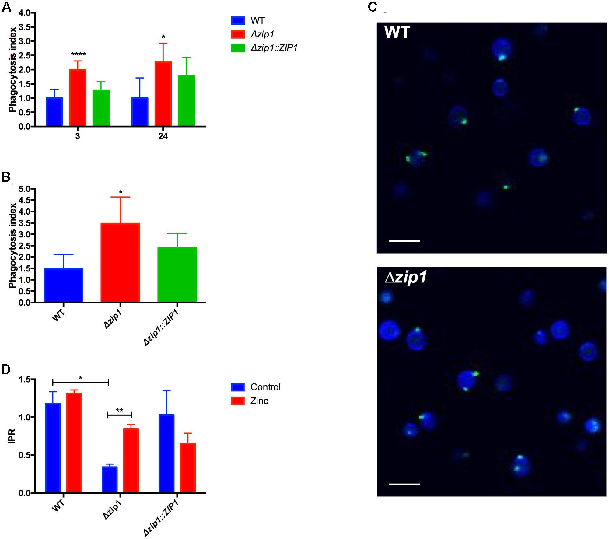 Frontiers | Modulation of Zinc Homeostasis in Acanthamoeba
