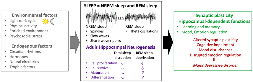 impact of sleep loss on hippocampus Effects of sleep deprivation on behaviors and abnormal hippocampal bdnf/mir-10b expression these results indicate that sleep deprivation is closely linked with.