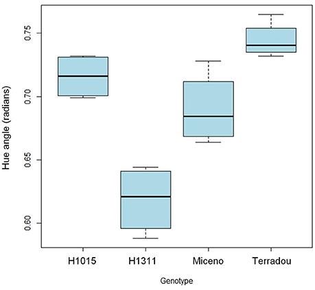 Frontiers | Combined Effects of Irrigation Regime, Genotype