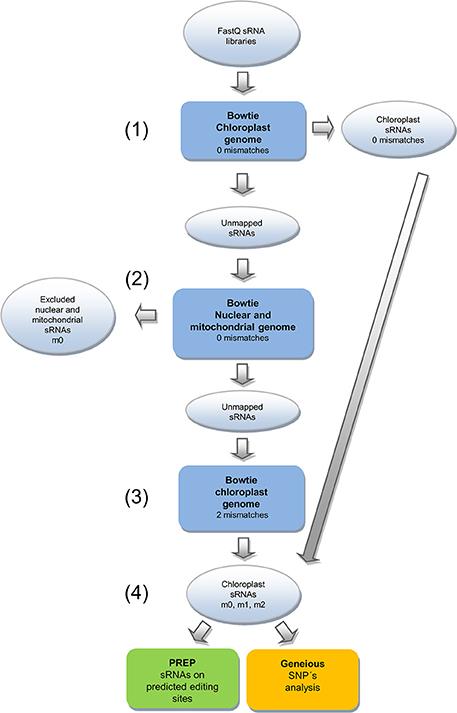Venn Diagram Of Chloroplasts And Mitochondria Vaydileforic