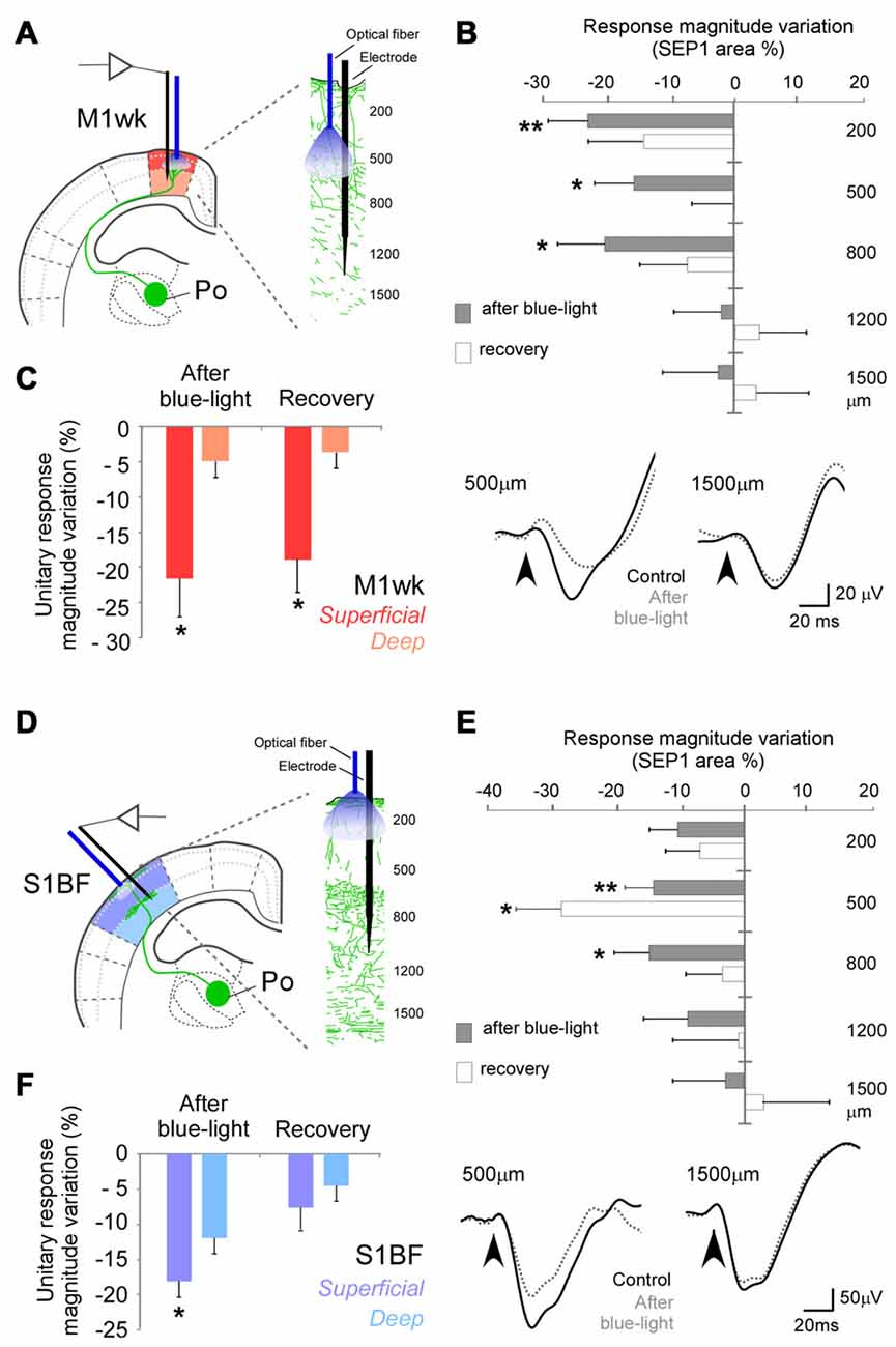 Pocell Circuit Diagram | Frontiers Posterior Thalamic Nucleus Modulation Of Tactile Stimuli
