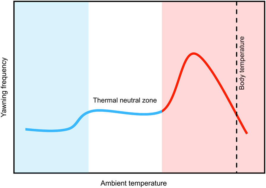 Figure 3 - Changes in ambient temperature affect the frequency of yawning in mammals and birds.