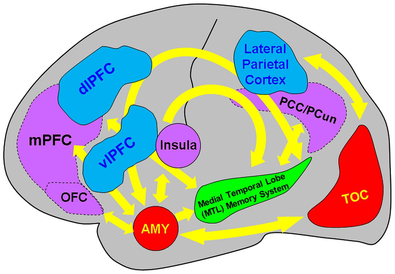 Frontiers | Emerging Directions in Emotional Episodic Memory