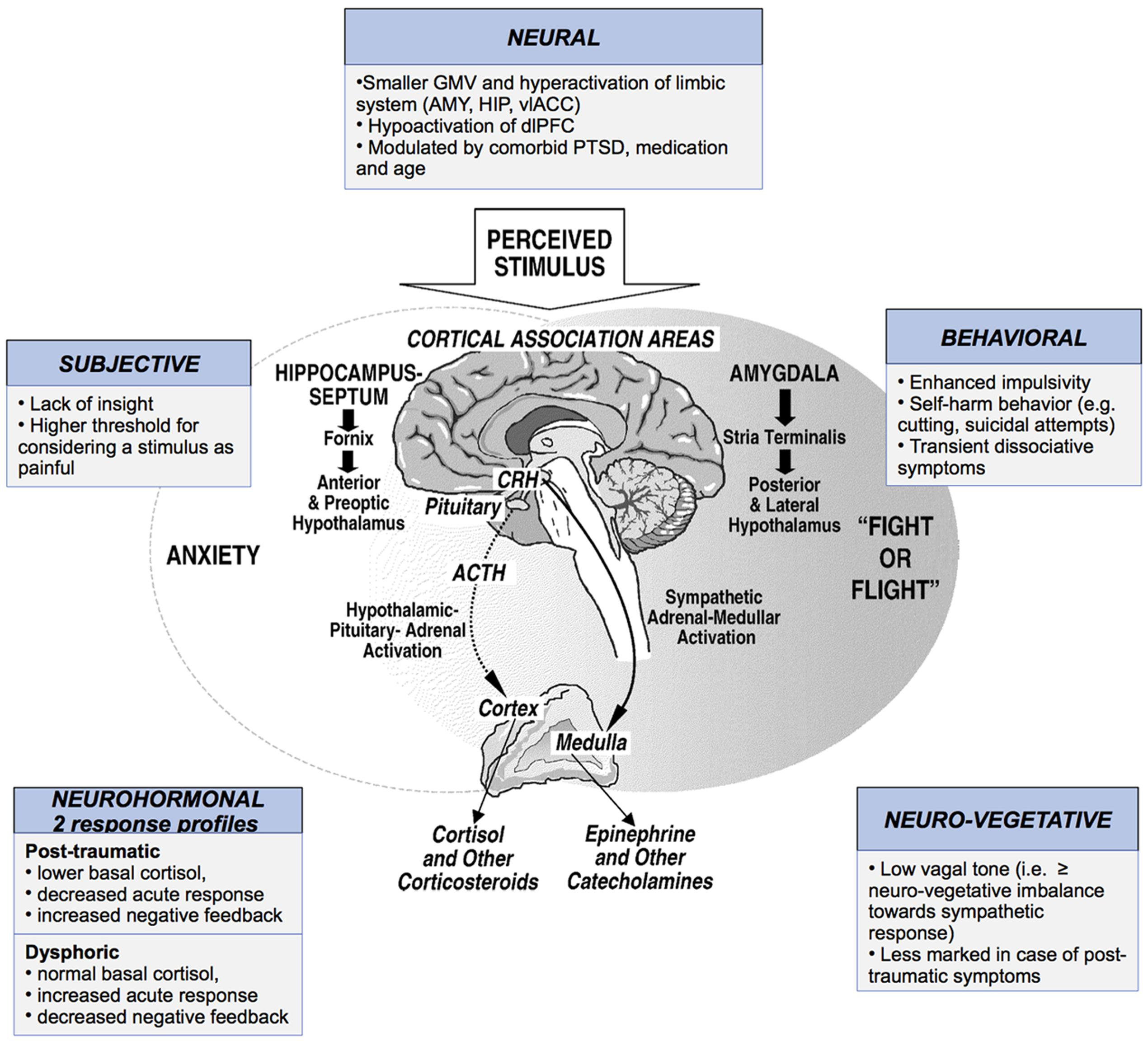 Frontiers | How Do Stress Exposure and Stress Regulation