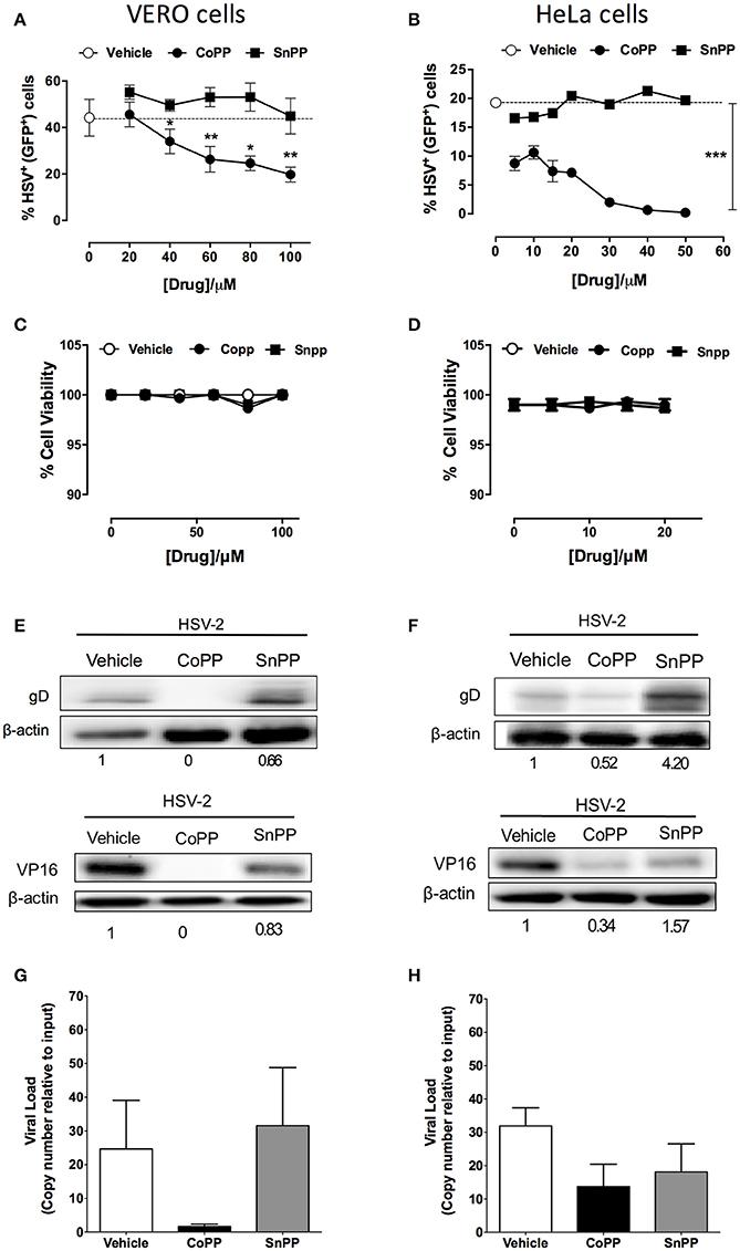Frontiers | Pharmacological Induction of Heme Oxygenase-1 Impairs