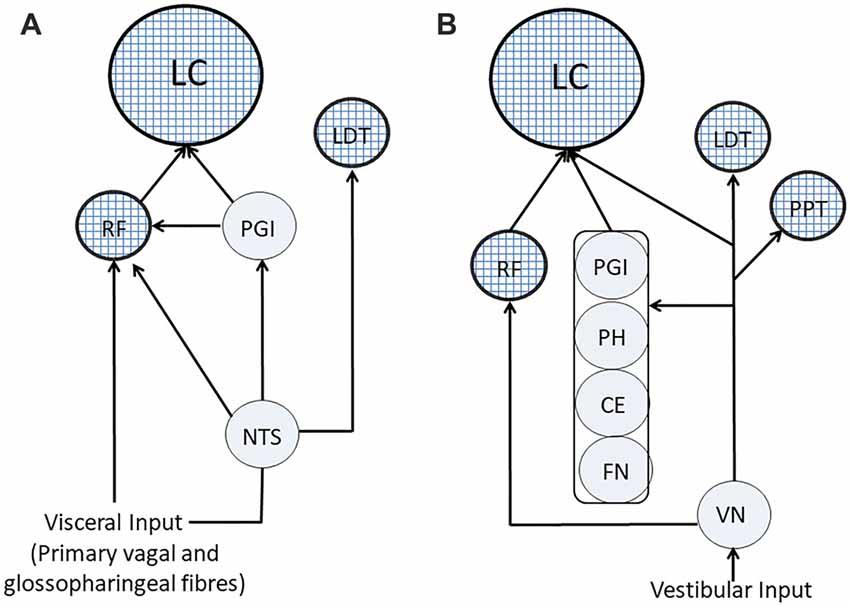 Frontiers | Trigeminal, Visceral and Vestibular Inputs May Improve ...