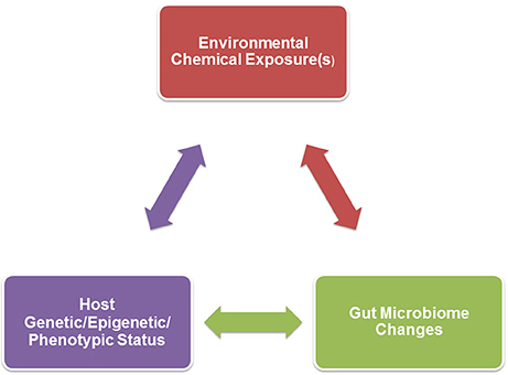 Frontiers | Gut Dysbiosis in Animals Due to Environmental Chemical