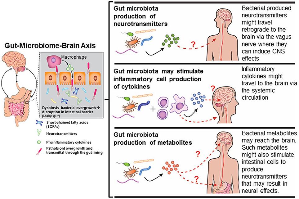 dysbiosis effects giardiasis que es