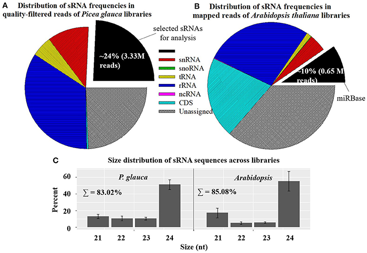 Frontiers   Global Analysis of Small RNA Dynamics during