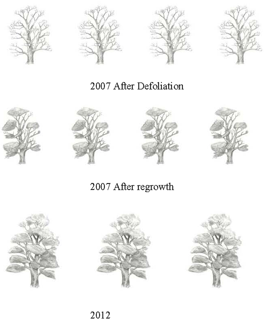 Figure 3 - Oak trees had reduced water loss and carbon uptake in 2007 after some of the leaves grew back.