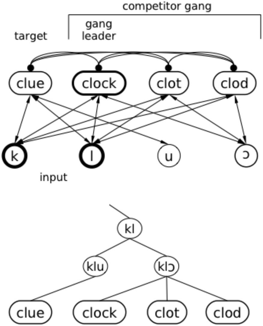 Frontiers Interaction In Spoken Word Recognition Models Feedback Morgan Olson Wiring Diagrams