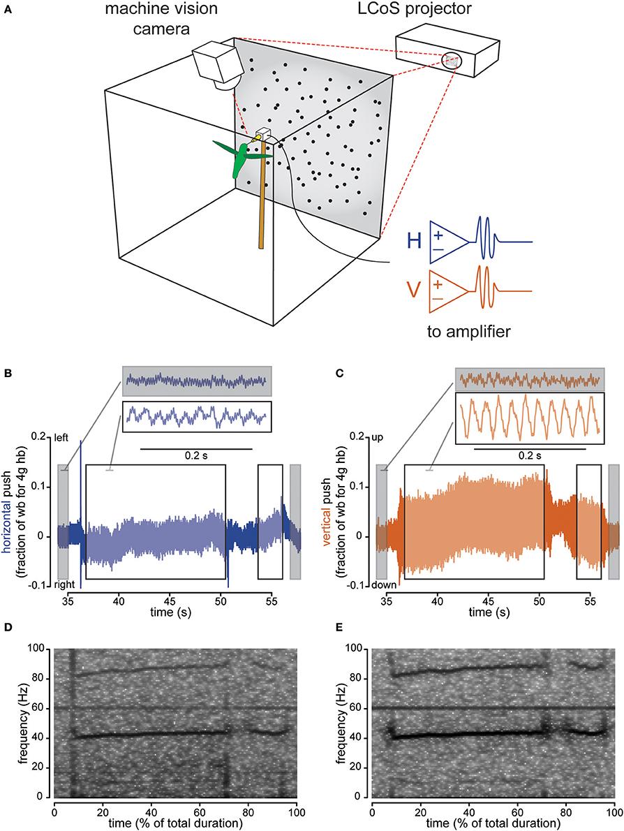 Frontiers Visual Sensory Signals Dominate Tactile Cues During Ni Usb 6008 Wiring Diagram