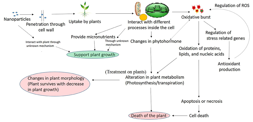 Micronutrient Deficiency in Soils and Plants