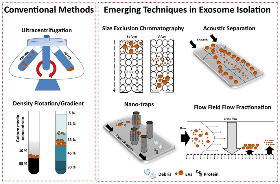 Frontiers Toward Exosome Based Therapeutics Isolation