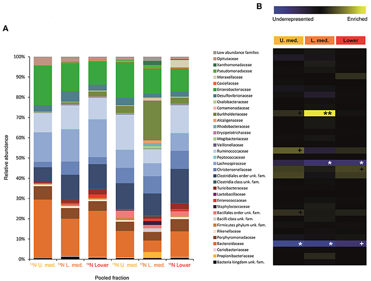 Frontiers   In Vivo Isotopic Labeling of Symbiotic Bacteria