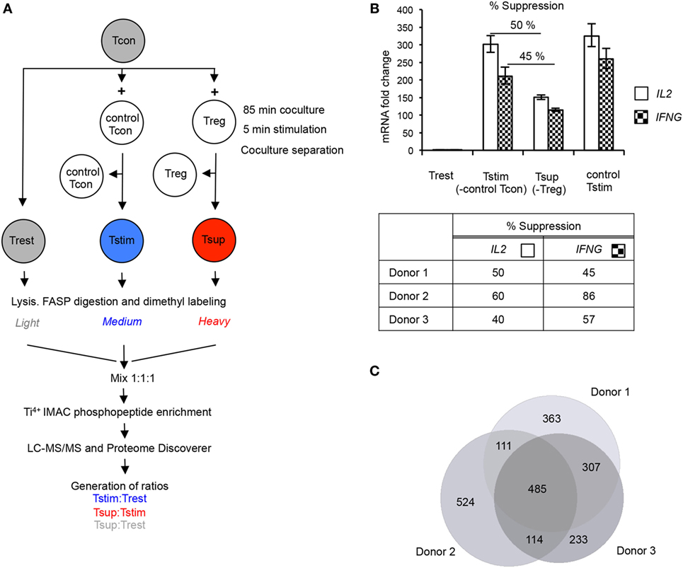 Frontiers | Phosphoproteomics Reveals Regulatory T Cell ... on
