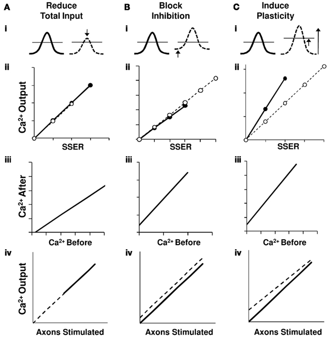 Frontiers | Summation in the Hippocampal CA3-CA1 Network