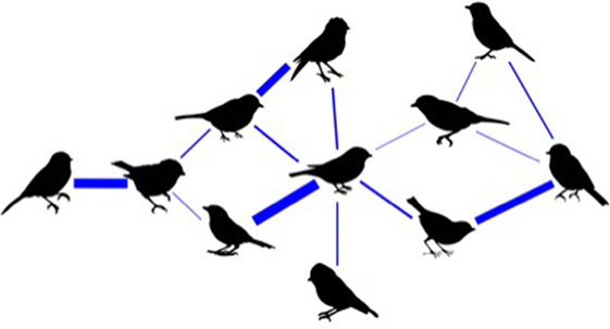 "Figure 1 - An example of a ""social network"" between animals."