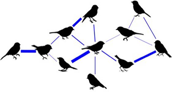 """איור 1 - דוגמה של """"רשת חברתית"""" בין בעלי חיים."""