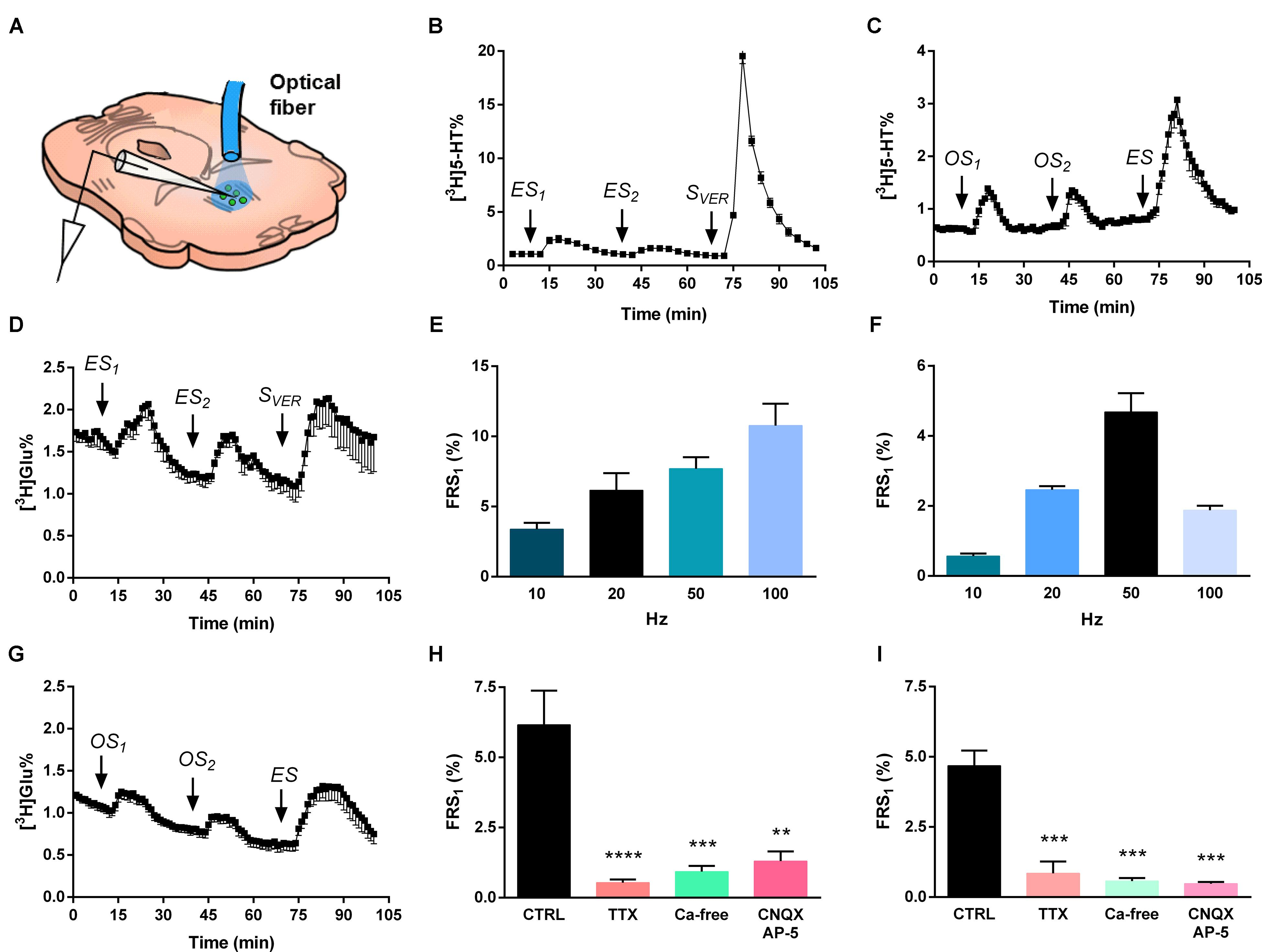 Frontiers Regulation Of Hippocampal 5 Ht Release By P2x7 Receptors Gilson 16 Hp Wiring Diagram