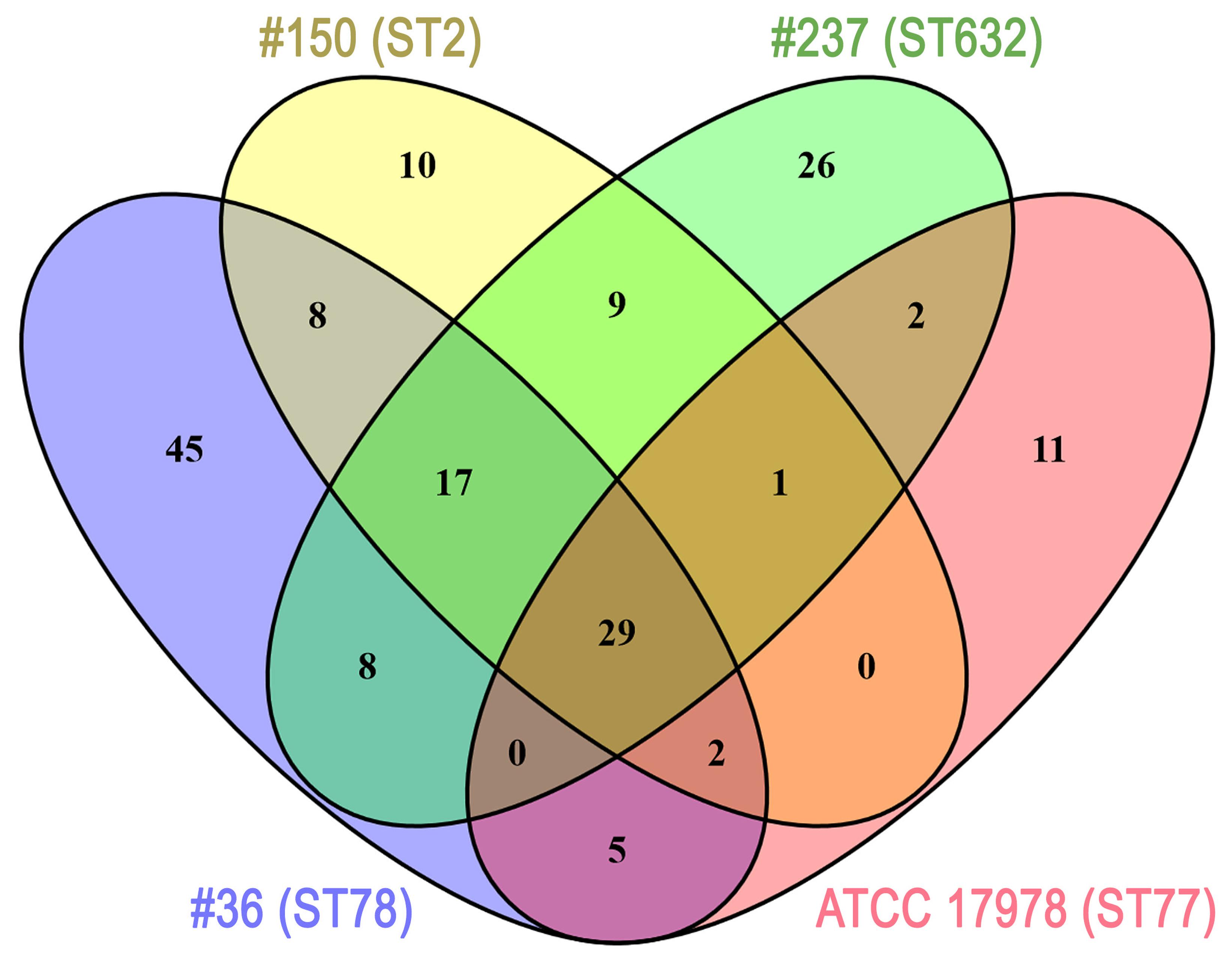Frontiers acinetobacter baumannii virulence traits a frontiersin pooptronica