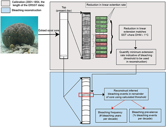 how can carbon dating be used to reconstruct the history of a coral reef