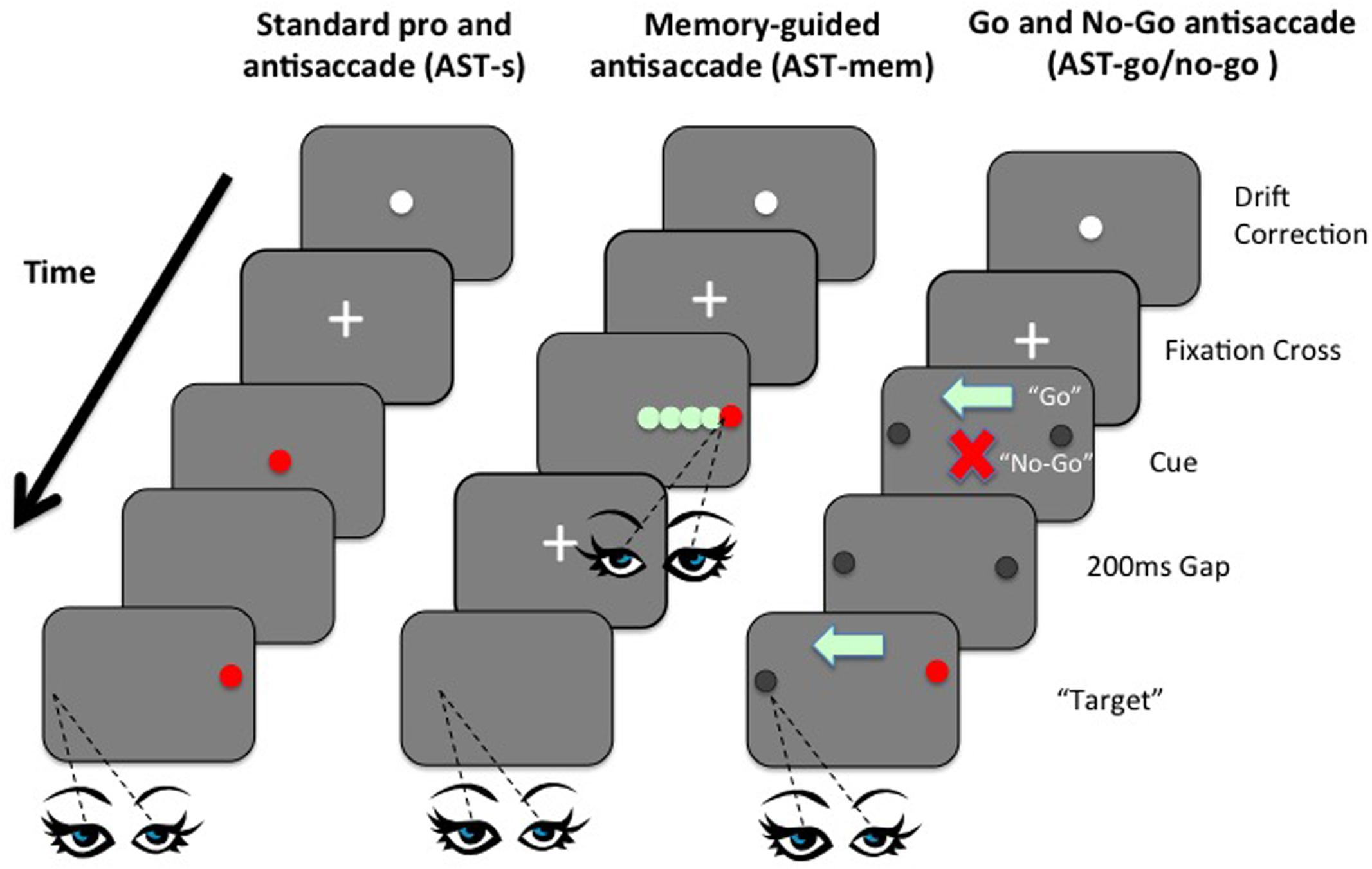 Frontiers Eye Gaze And Aging Selective And Combined Effects Of
