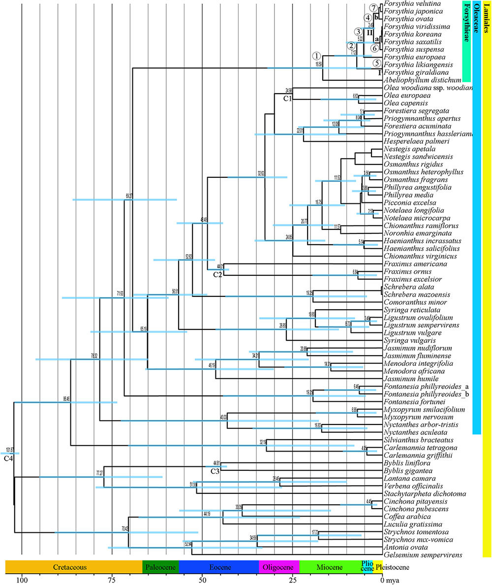Molecular dating of phylogenies by likelihood methods