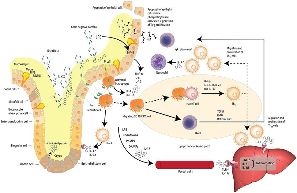 Dysbiosis nafld, A Inulin keresési eredményei - Klinikai vizsgálatok nyilvántartása - ICH GCP