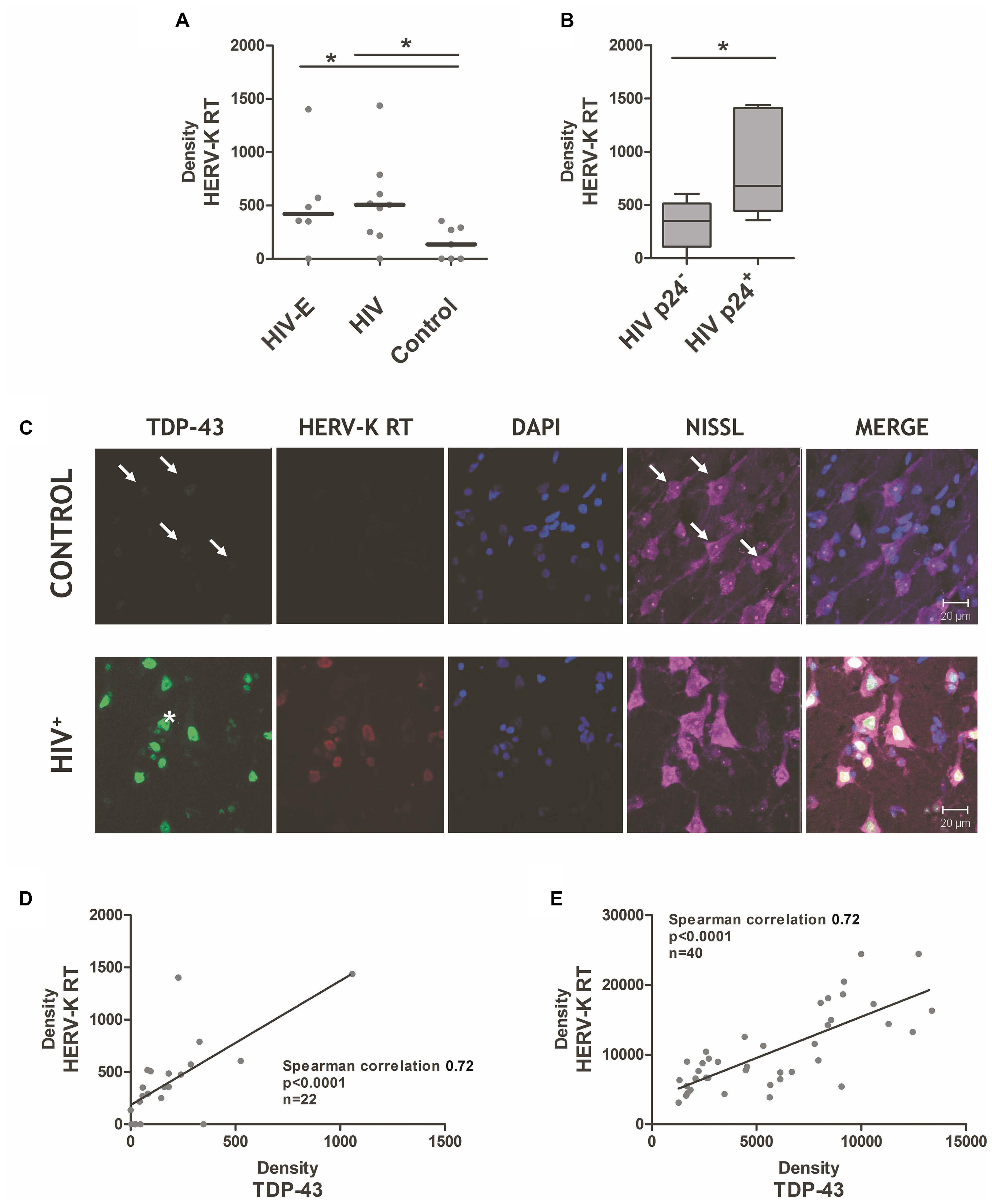 Frontiers | Human Endogenous Retrovirus-K and TDP-43