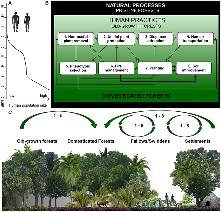 Frontiers How People Domesticated Amazonian Forests Ecology And