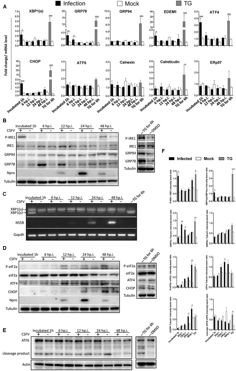 Frontiers | CSFV Infection Up-Regulates the Unfolded Protein