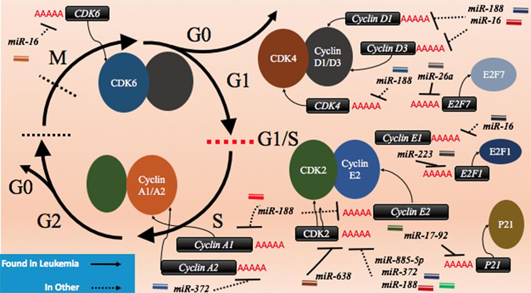 Frontiers   microRNAs and Acute Myeloid Leukemia