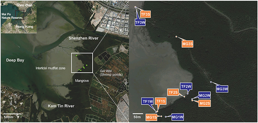 Frontiers | Stratified Bacterial and Archaeal Community in Mangrove