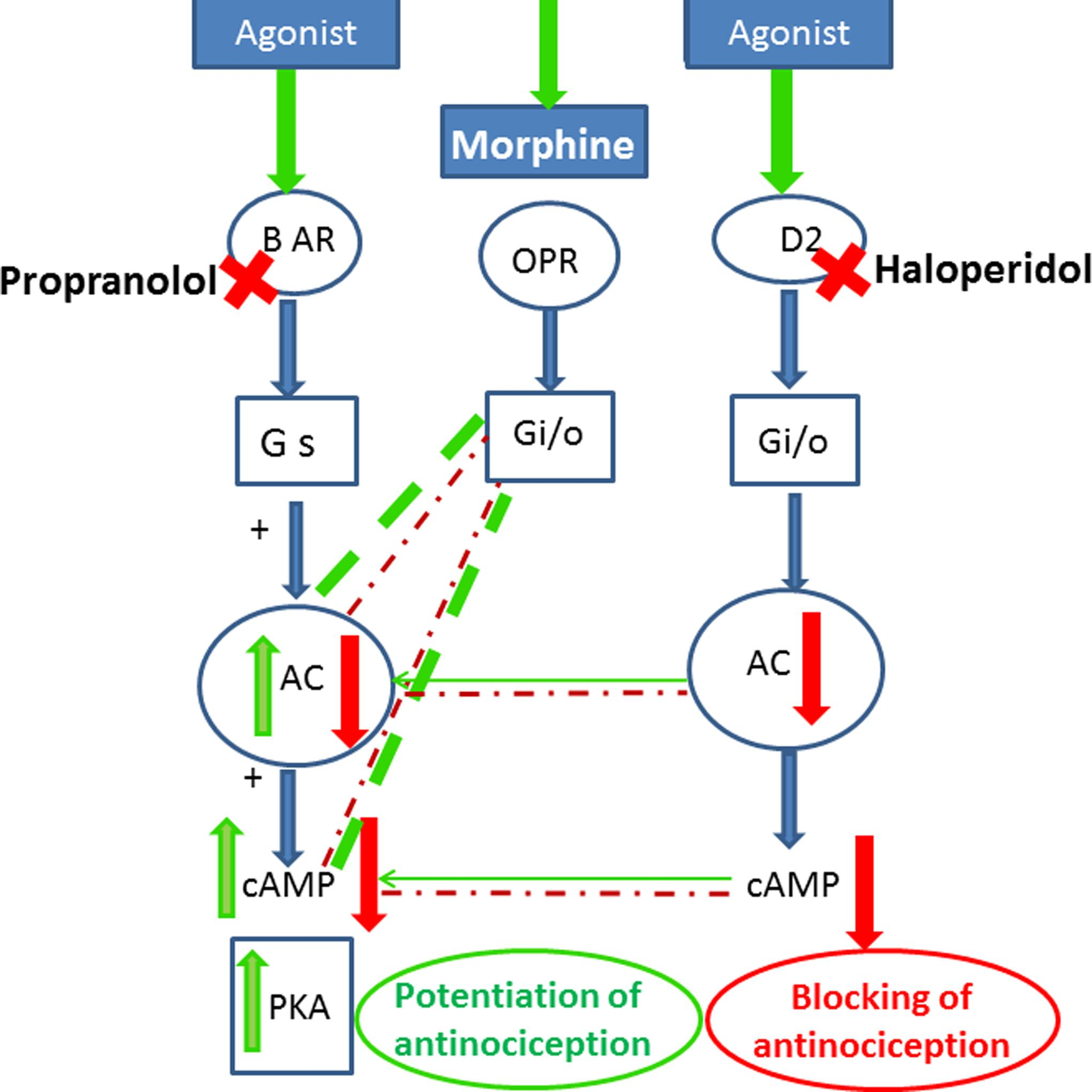 Frontiers | Potentiation of Morphine-Induced Antinociception