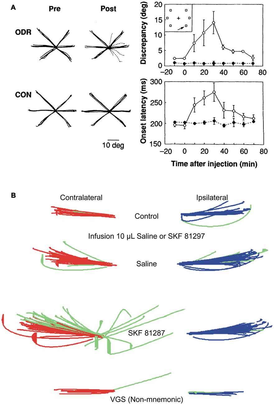 Frontiers Neuromodulation Of Prefrontal Cortex In Non Human Time Delay Circuits Activity
