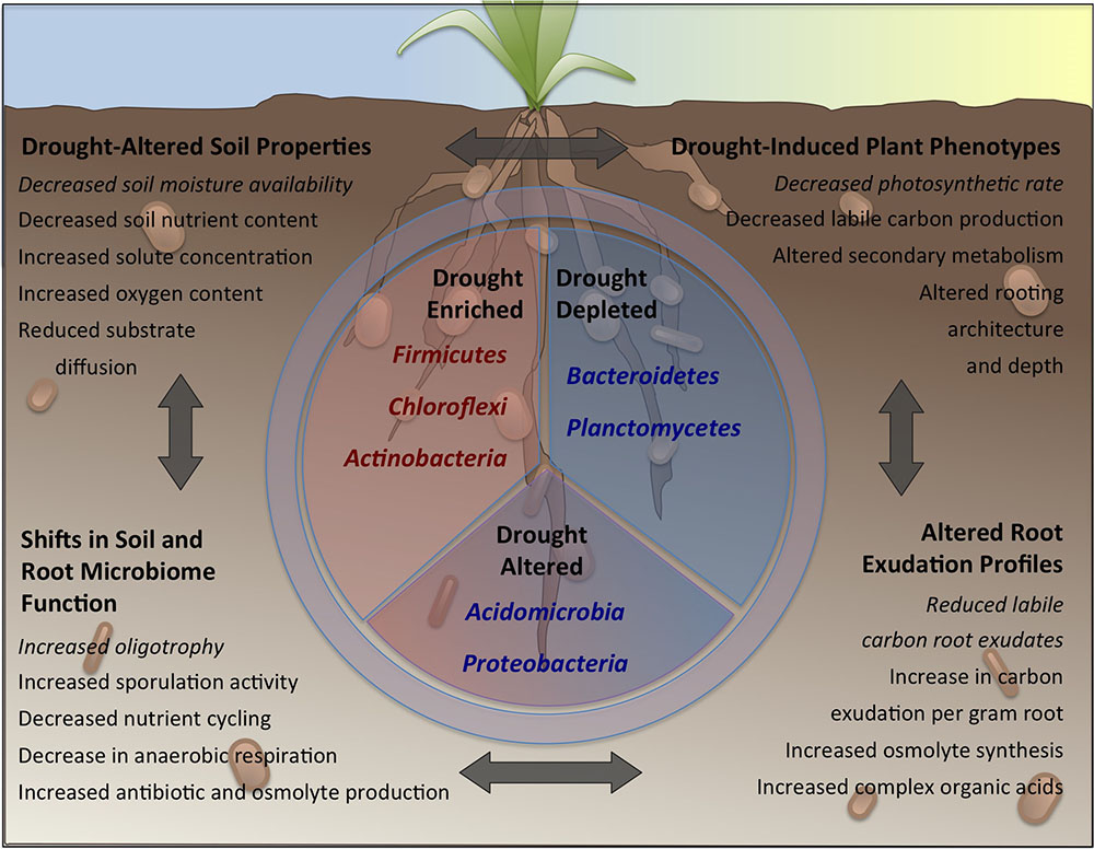 Frontiers | Drought Stress and Root-Associated Bacterial Communities