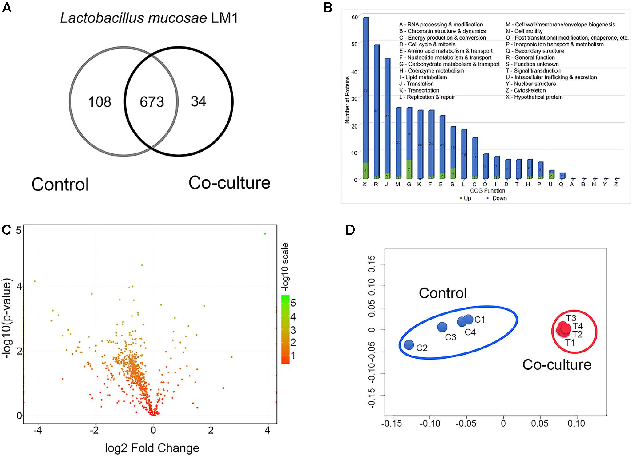 Frontiers | Proteomic View of the Crosstalk between Lactobacillus