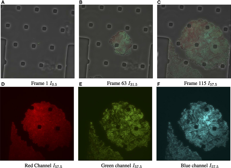 Frontiers | A Novel Methodology for Characterizing Cell