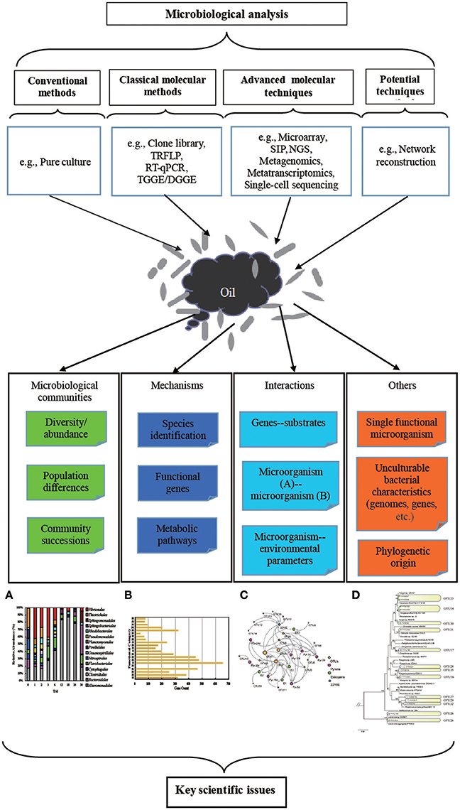 Frontiers | A Retrospective Review of Microbiological
