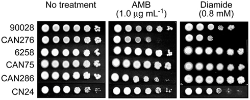 Frontiers | Enhancement of Antimycotic Activity of Amphotericin B by