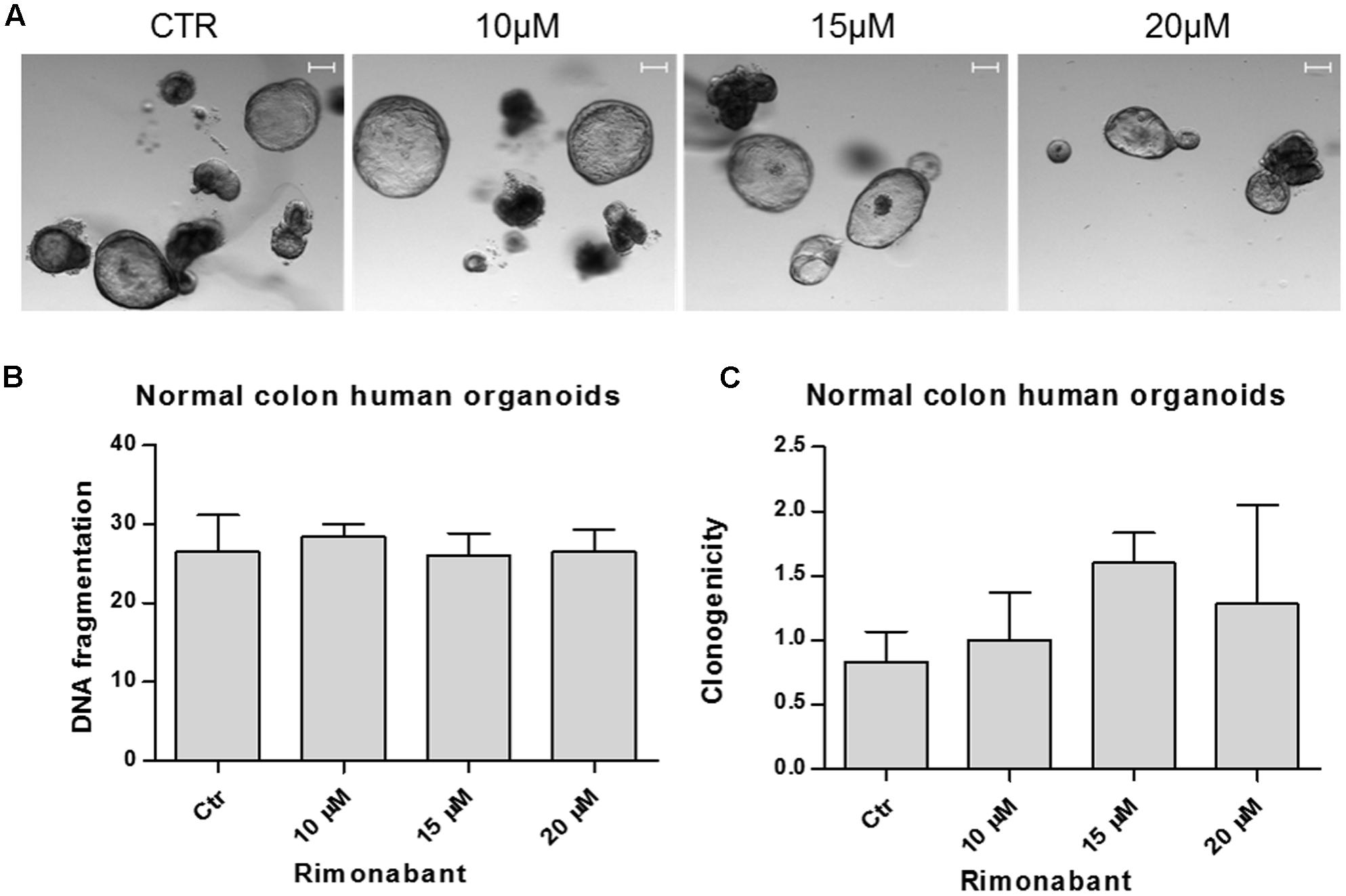 Frontiers | Rimonabant Kills Colon Cancer Stem Cells without
