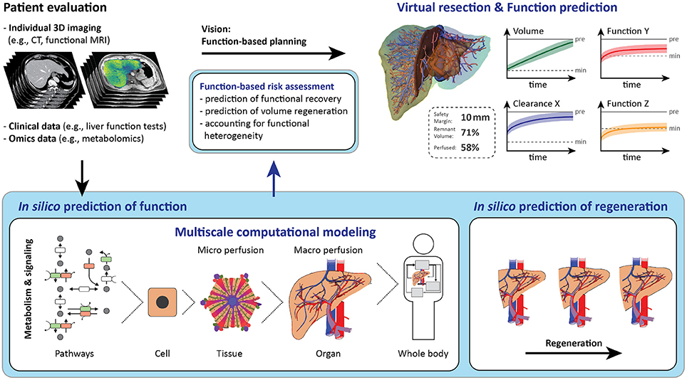 Frontiers Computational Modeling In Liver Surgery Physiology