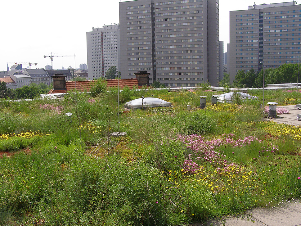 Frontiers | The Green Roof Microbiome: Improving Plant Survival for