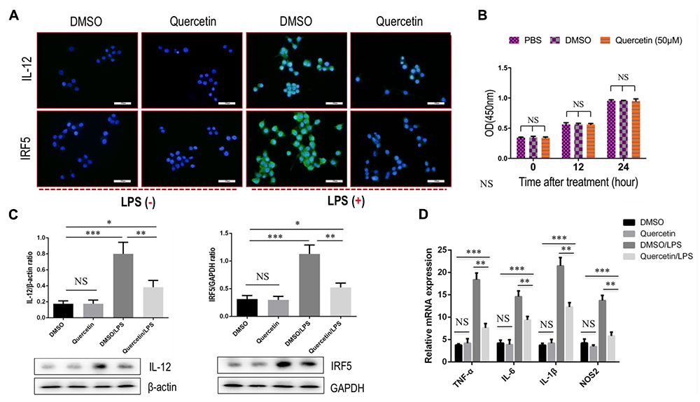 Frontiers | The Flavonoid Quercetin Ameliorates Liver Inflammation