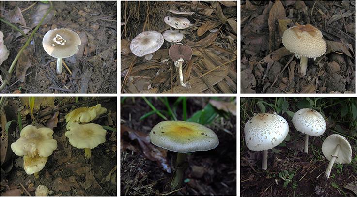 Handbook psilocybin pdf mushroom