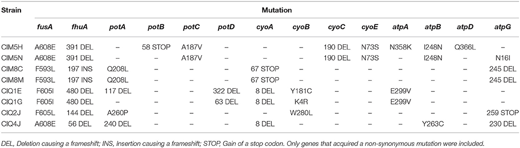 Frontiers | Parallel Evolution of High-Level Aminoglycoside