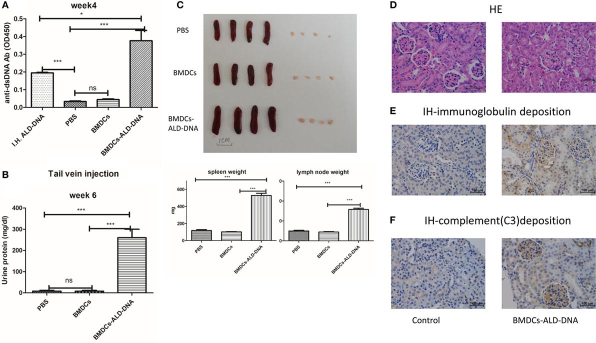 Frontiers immunosuppressive effect of b7 h4 pathway in a murine frontiersin nvjuhfo Gallery
